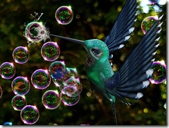 soap-bubbles-gc5e0d1947_640