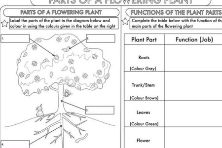 Flower Parts Worksheets Middle School New Artist 2018 New Artist