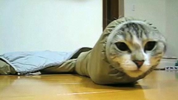 Cat in jacket sleeve @ Yahoo! Video