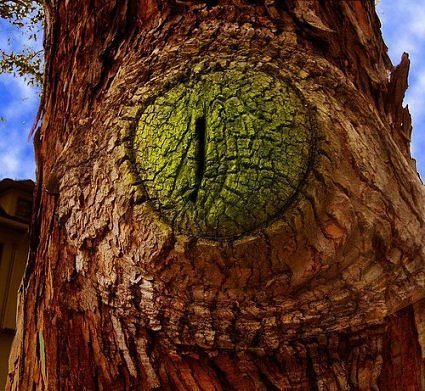 An alligator eye caught on the bark of a tree. (Photo: doyle_saylor/environmentalgraffiti.com)