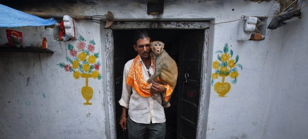 To match Reuters Life! INDIA-MONKEY/WEDDING