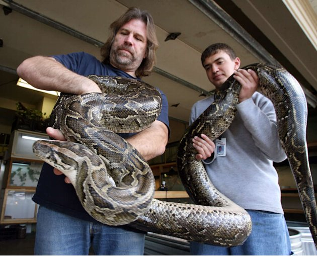 In this April 18, 2006 photo, Jim Dix, left, and volunteer Daniel Ader hold a female Burmese Python at Reptile Rescue Service in West Valley City, Utah. Utah transportation officials are trying to evi