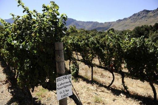 A vineyard is seen in the South African town of Franschoek. First planted by 17th-century European settlers, South Africa's vineyards add billions of rands to the economy and have made the country the world's seventh-largest producer