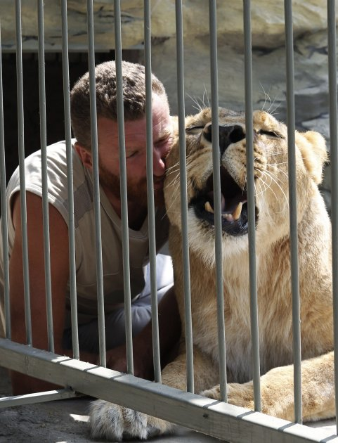 Zoo owner Pylyshenko strokes female African lion Katya inside a cage at a private zoo situated in his yard in Vasilyevka