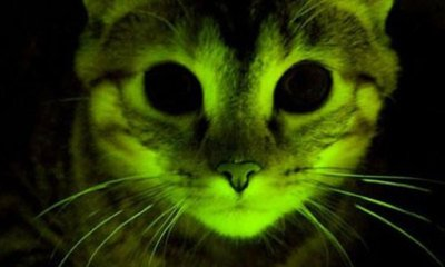Glow-In-The-Dark Cats Help Aids Research