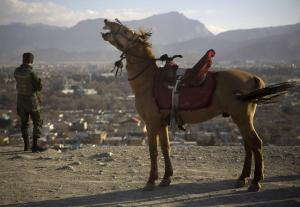 A horse neighs next to an Afghan soldier observing…