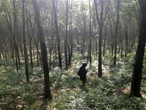 Guide walks through the woods outside a suspected human…