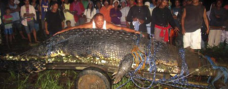 Crocodile known as Lolong makes history (AP)