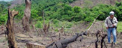 Rừng phòng hộ đầu nguồn hồ Đại Sơn, Bình Định bị phá - Ảnh: hoàng trọng