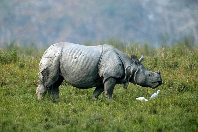 Shocking Photos: Poachers chop Rhinos' horns