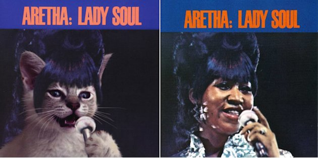 Artist Uses Kittens to Recreate Classic Album Covers