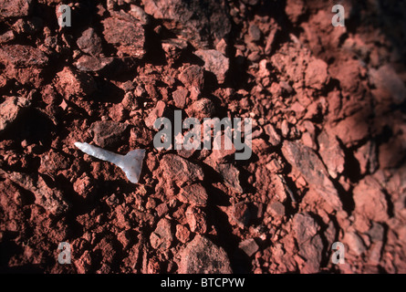 Early Native American Indian stone tomahawk that was found ...