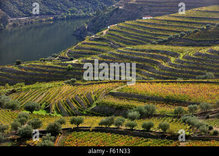 Vineyards in Douro valley in the heart of Alto Douro Wine ...