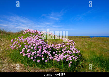 WIld Flowers Along The West Coast Of The South Island New