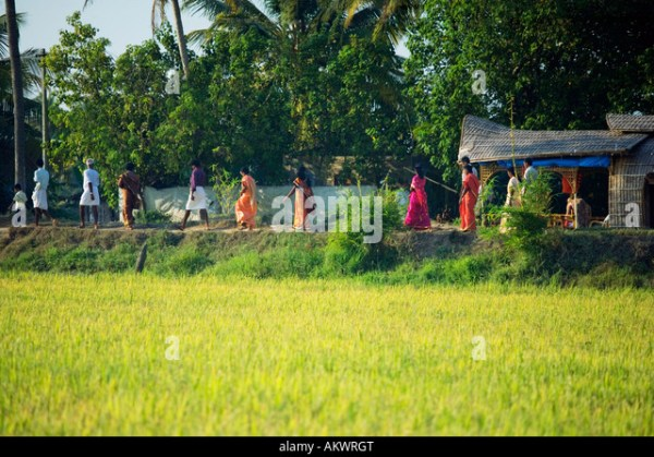 Women Walking Rice Fields Stock Photos & Women Walking ...