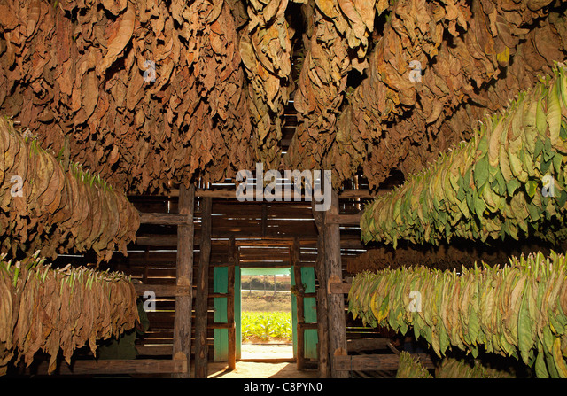 Image result for tobacco drying shed