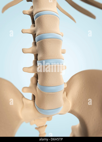 Female Anatomy Posterior Superior Iliac Spine Posterior View