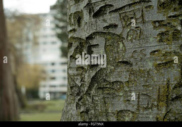 Mountain Tree Sillouhette
