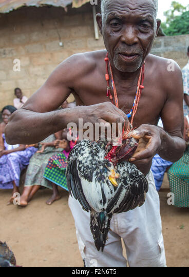 Benin, West Africa, Bopa, chicken sacrified by dah tofa voodoo master - Stock Image