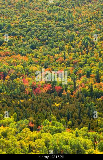 Door County Color Trees