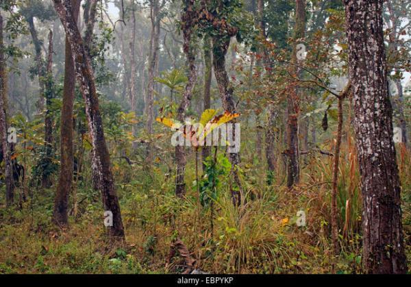 Chitwan National Park Stock Photos & Chitwan National Park ...