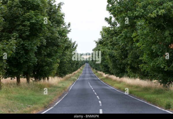 Long Grass And Road Stock Photos & Long Grass And Road ...