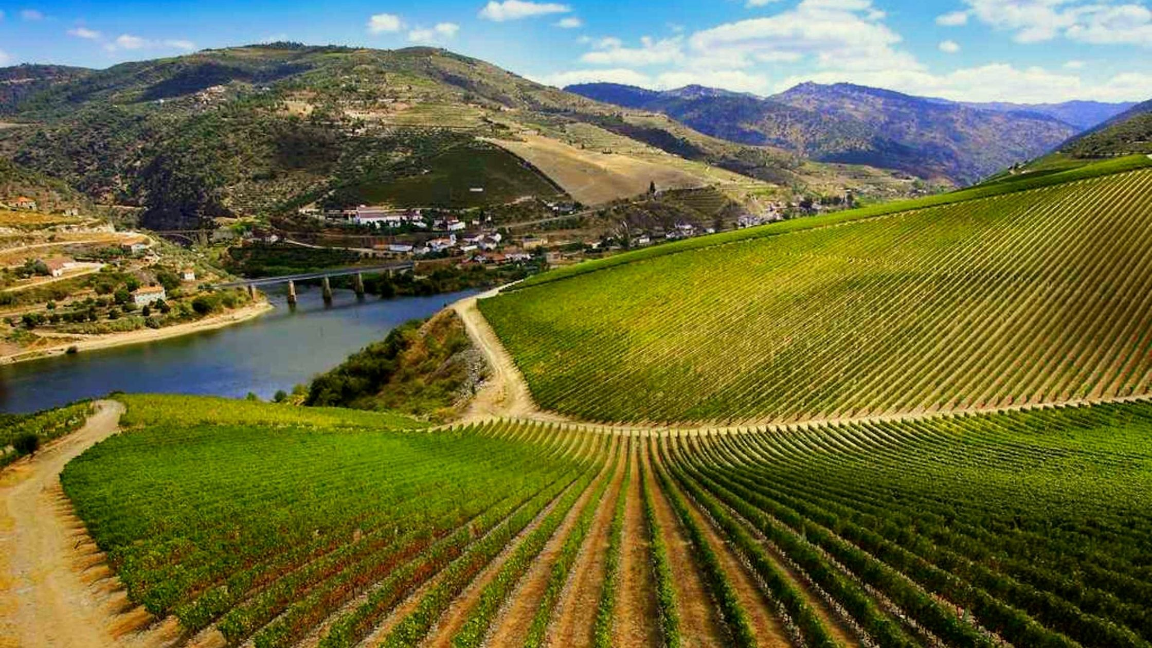 Ribera del Duero, sus vinos y rutas