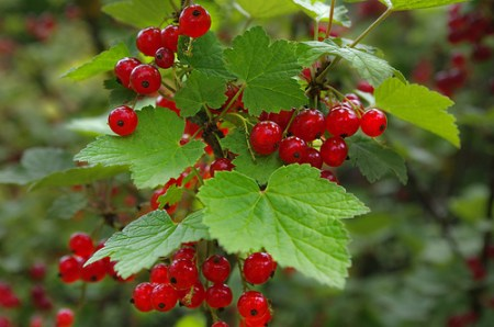 fruits-été-pour-rester-en-bonne-santé