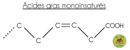 acide gras monoinsaturé