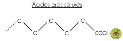 acide gras saturé