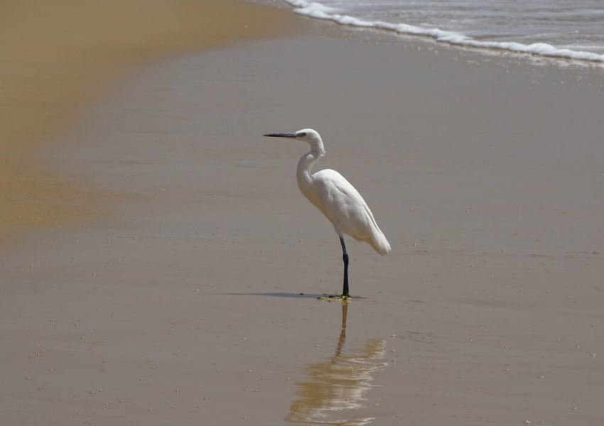 vacances senegal, tourisme senegal, voyage senegal, voyage sur mesure, visite senegal, voyage organise, iles du saloum, balade en pirogue, pelican du saloum, aigrettes du saloum, la boutique de pasccaline, le voyage de pascaline