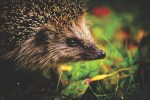 Biodiversité en danger: comment agir à notre niveau?