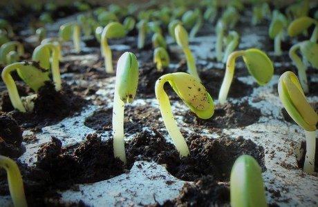 plants-jcesar2015 - Pixabay