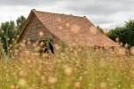 Le mélange de semences pour prairie: bonne ou mauvaise solution pour la biodiversité?