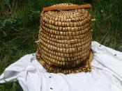 les dernières abeilles prennent possession de la ruche