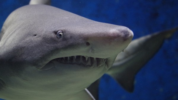 Tiburon mordida