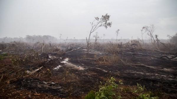 Deforestación en campeche