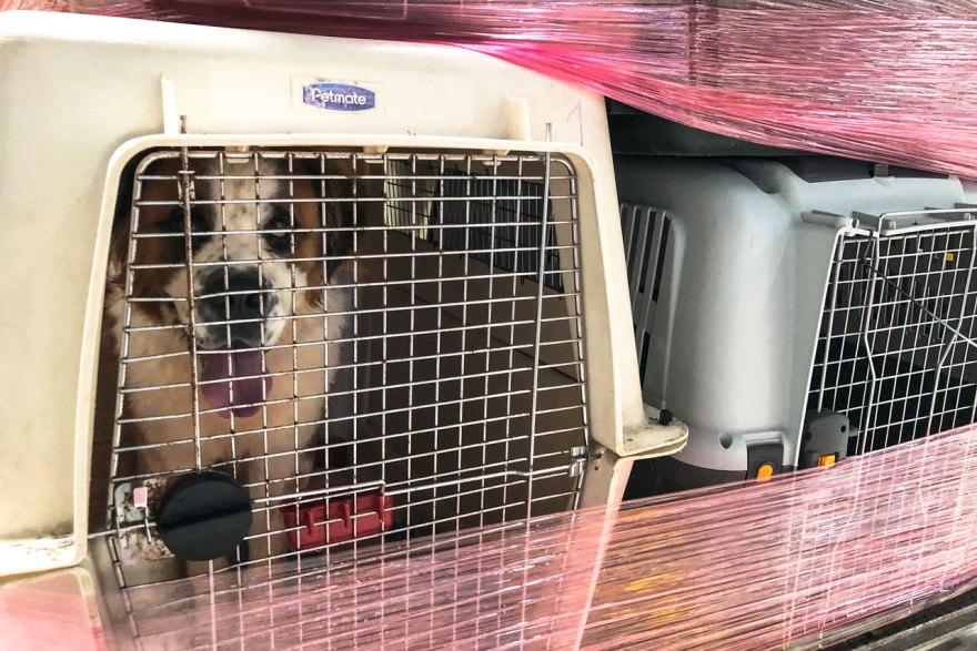 perros, perro, vuelo perros en avion