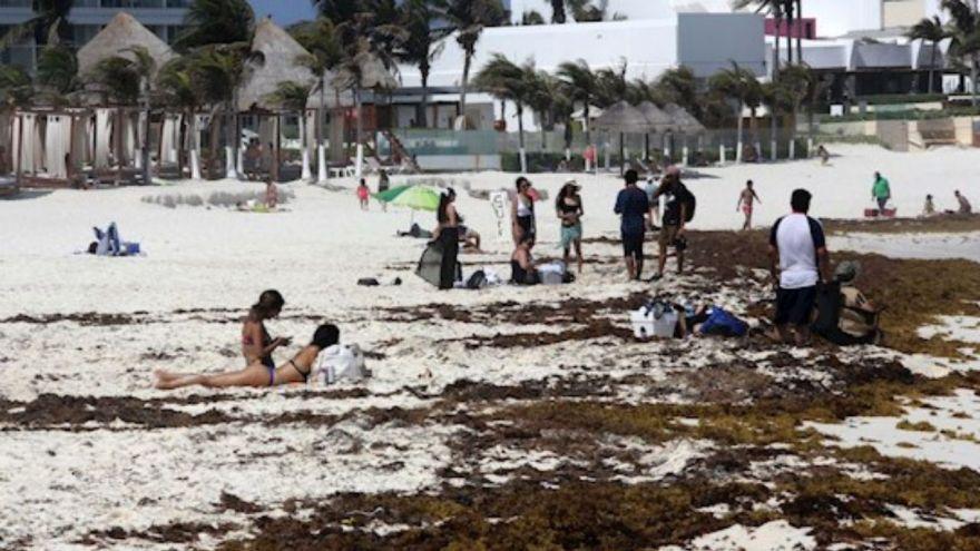 playas-mexicanas-sargazo