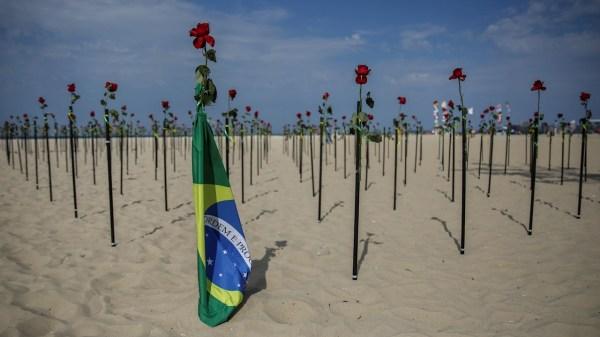 rosas en memoria de los muertos de covid-19 en Brasil