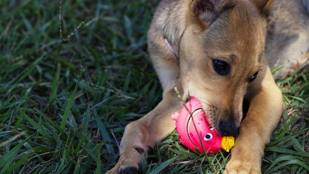 perros día mundial del perro