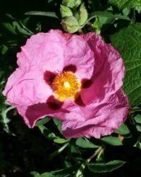 fleur yoga du plancher pelvien
