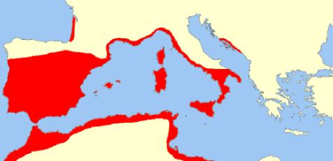 Area quercia da sughero