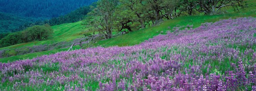 naturopathie - champ de fleurs