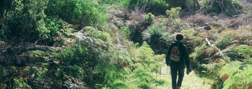 remettre en mouvement - marche dans la nature