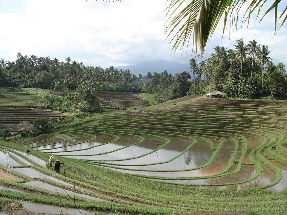 """Jamu"" la médecine traditionnelle indonésienne"