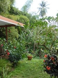 jardin-creole