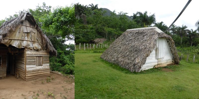 construction-palmier-maison