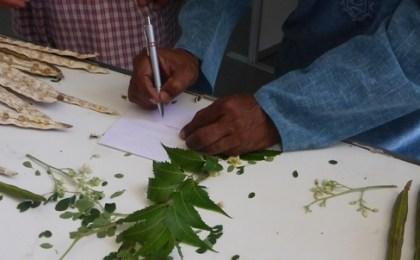 plantes-indiennes-antilles