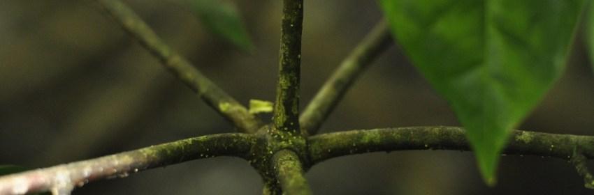bois-lele-arbre